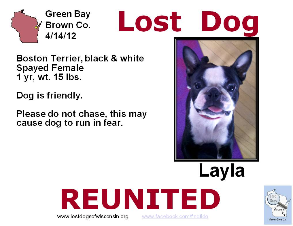 Our Friday Reunited Story II – Missing Dog Flyer Template