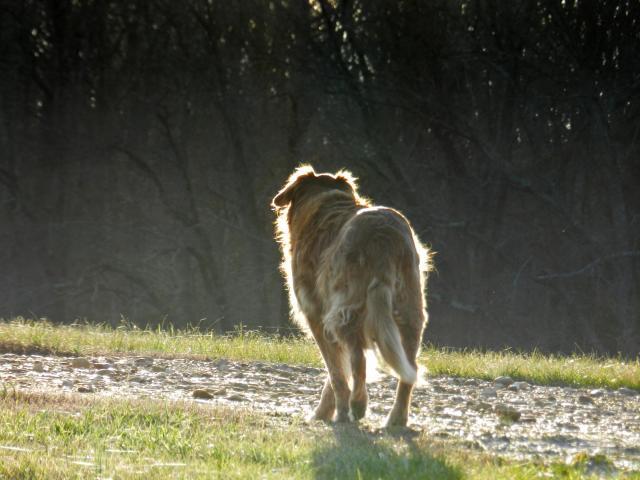 sighting of lost dog