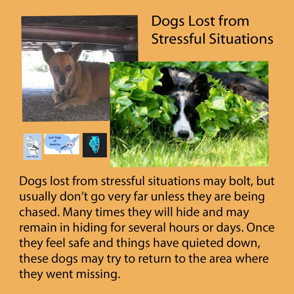 how to make a lost dog flyer