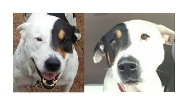 reversed photos of dog