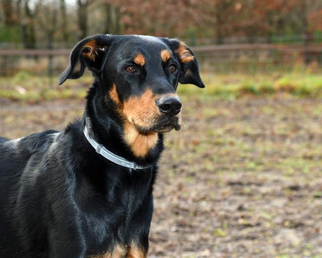 dog-3048395_1920