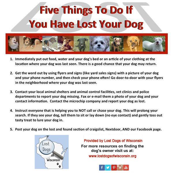5 Things if you've lost your dog
