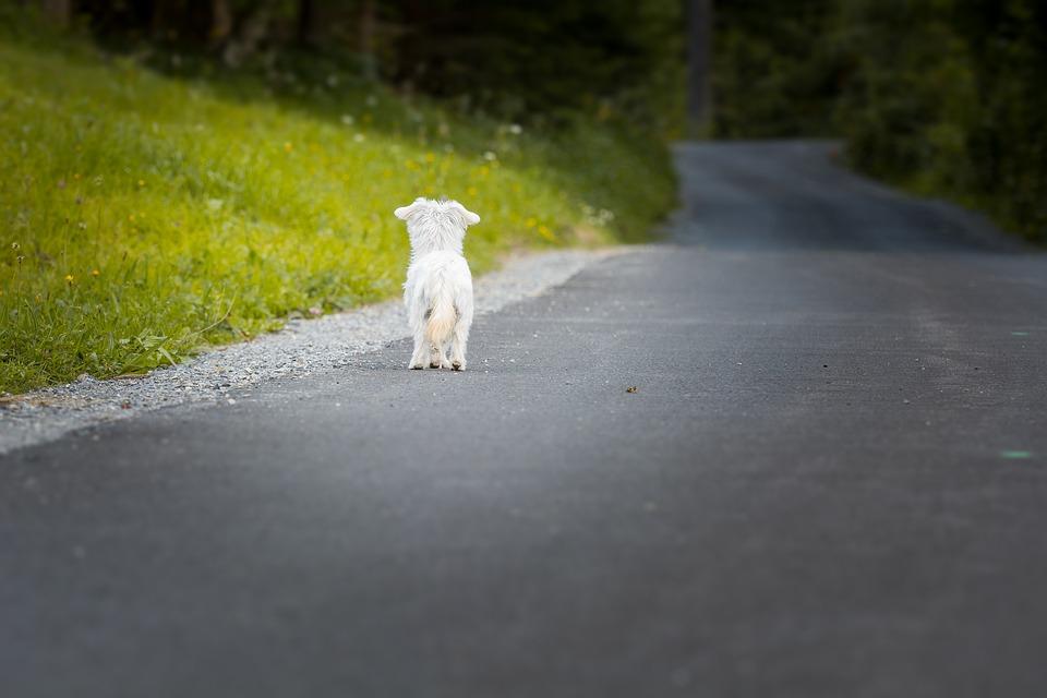 dog-1543329_960_720